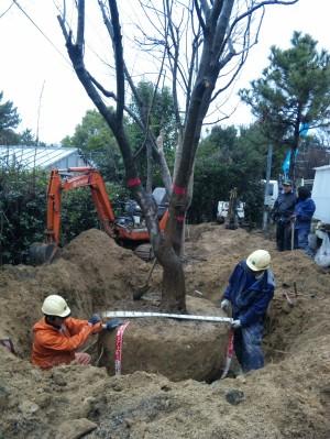 トチュウの掘り取り・移植工事  大阪府吹田市 H大学様