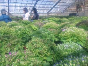 土作りからの庭造り  廿日市市  中本園芸