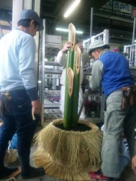 竹の据え付け