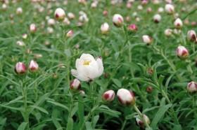 春が見頃の植物