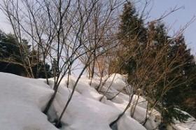 冬が見頃の植物