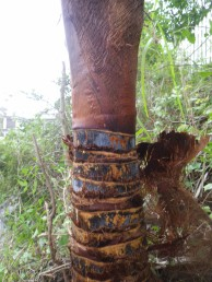 のり面の除草および伐採と防草シート敷設 廿日市市 Y邸