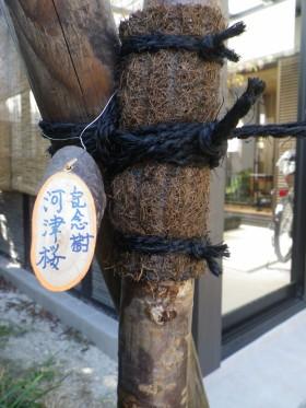 記念樹ラベル