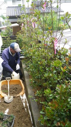 ヒメシャリンバイを生け垣に植栽したアプローチ 廿日市市  T邸