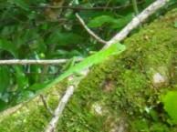 緑のトカゲ