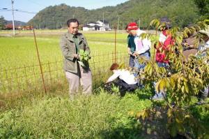 秋の野草酵素作り