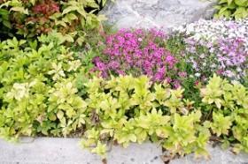 今が旬 見頃の植物