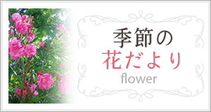 季節の花だより